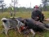 Peter Augustsson med skjuten ko för Myran